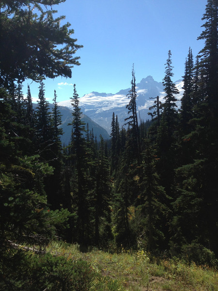 2013-09-13 - Mt Rainier, trees and meadow, WA, USA