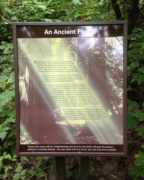2013-09-13 - An Ancient Forest - Patriarchs Grove at Mt Rainier